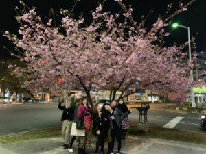 豊橋駅前で美しく咲いていた桜の前で記念差撮影!河津桜?
